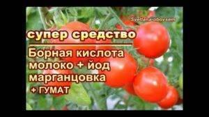 Янтарная кислота для помидор и огурцов: советы по применению и выбор дозировки для комнатных, тепличных и выращиваемых на открытом грунте растений (80 фото)