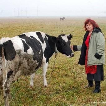 Сколько стоят молодые и взрослые коровы, продажа коров мясной и молочной пород