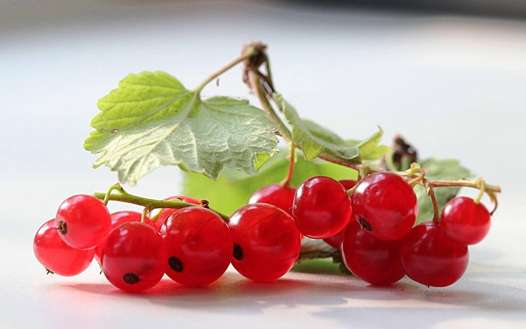 Обзор популярного сорта красной смородины «натали»
