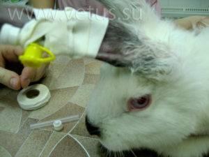 Понос у кролика: чем лечить в домашних условиях, что делать, причины