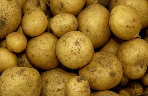 О картофеле Ривьера: описание сорта, характеристики, агротехника