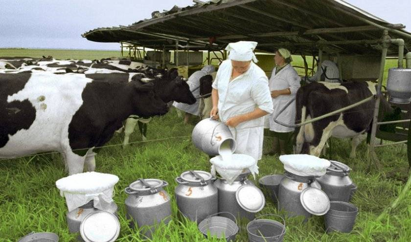Статьи о содержании крс на korovainfo.ru | состав молока