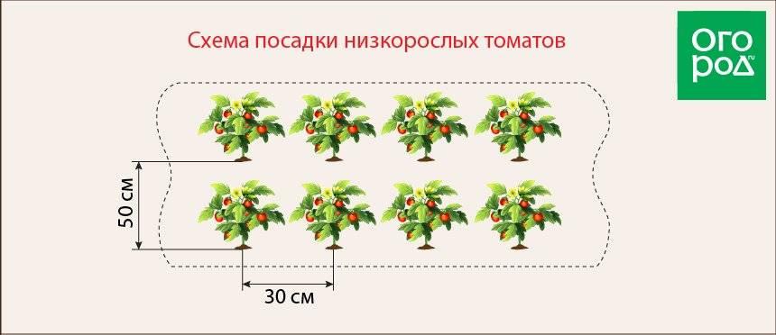 Схема посадки томатов в теплицу