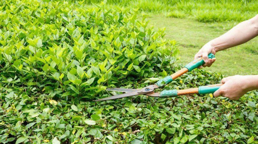 Обрезка плодовых деревьев весной – советы для начинающих и не только