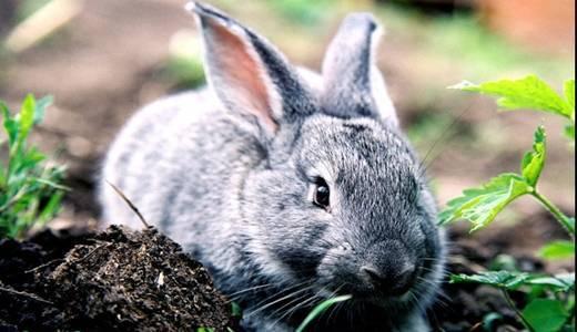 Что делать, если кролик стал вялым, ничего не ест и не пьет?