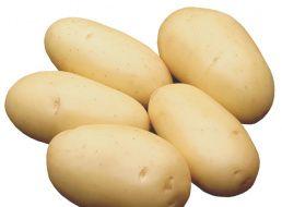 """Картофель """"лорх"""": описание сорта, характеристики и фото"""