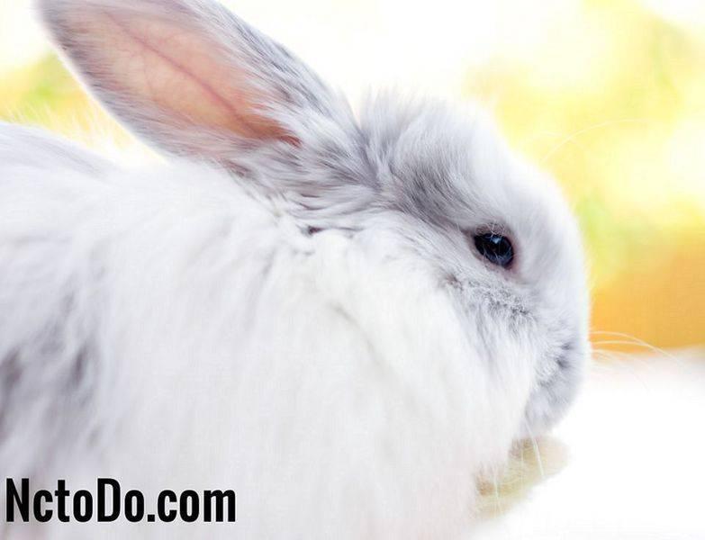 Линька у декоративных кроликов