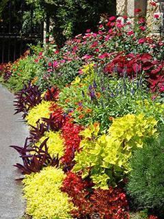 Секреты создания клумб непрерывного цветения: советы от дизайнера