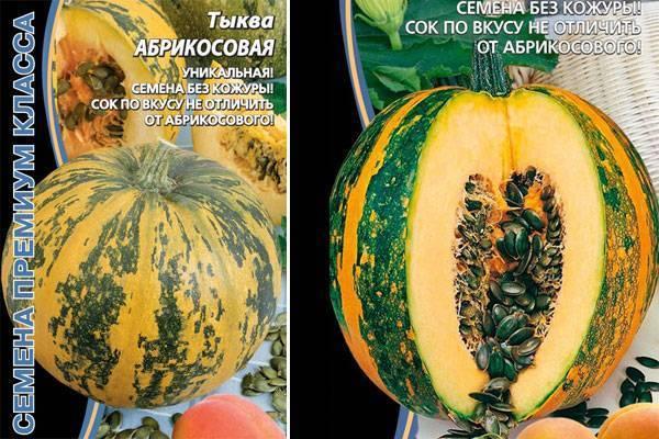 Тыква грибовская: описание, выращивание