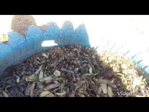 Как вырастить редис из рассады? пошаговые инструкции по применению обычного способа и метода улитки