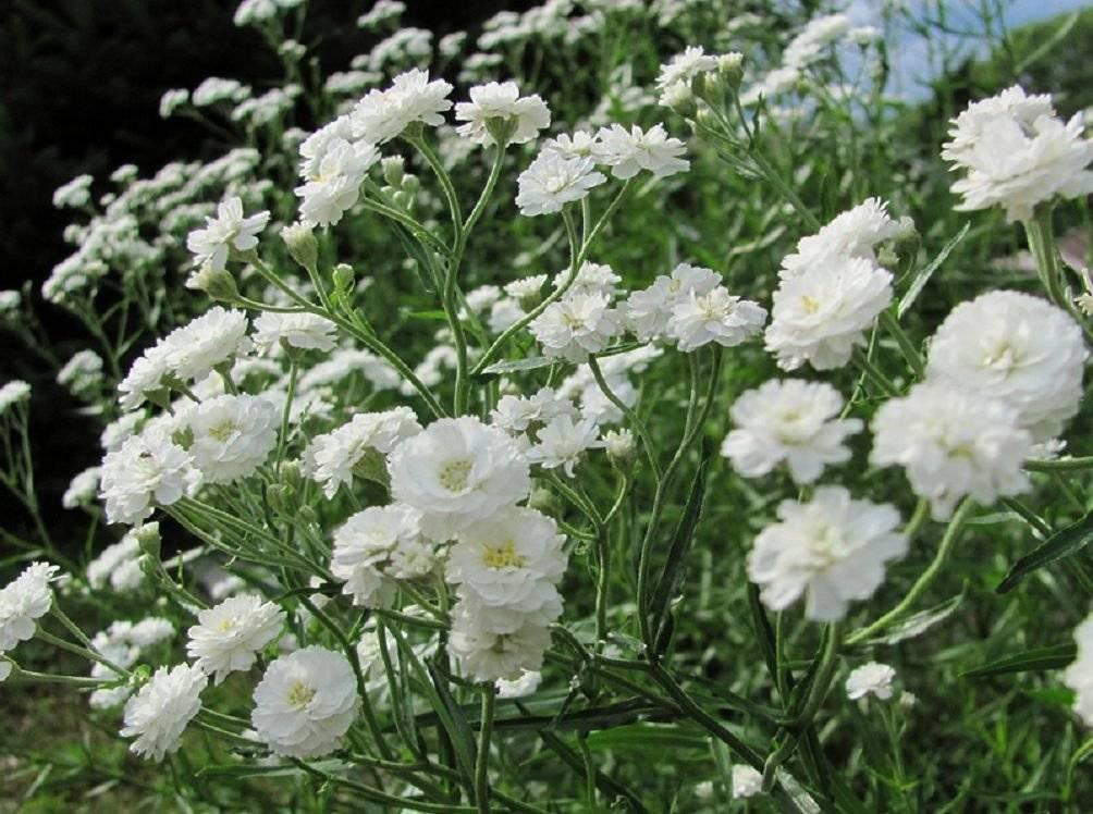 Флористика сухоцветы к вопросу о хранении материал природный