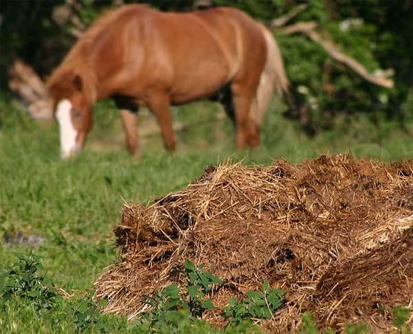 Как быстро откормить лошадь на мясо?