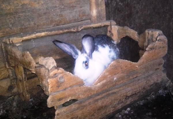 Почему кролики грызут деревянную клетку и кусают человека - общая информация - 2020