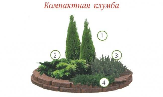 Миксбордер из хвойных растений своими руками: схемы, идеи и много фото!