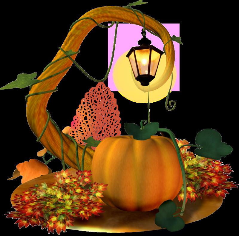 Тыква: посадка семенами в открытый грунт и последующий уход, описание лучших сортов, особенности агротехники | (фото & видео)