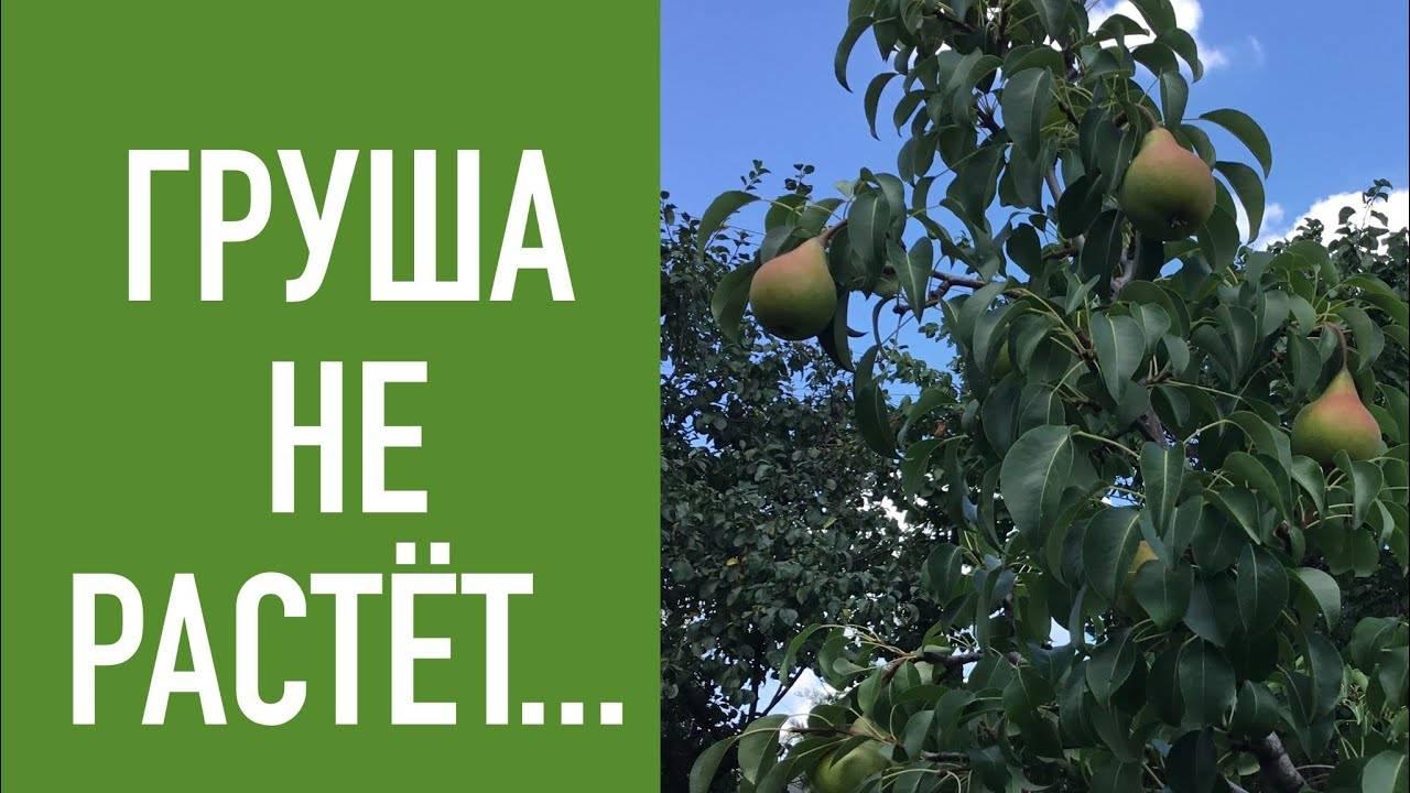 Молодая яблоня плохо растет что делать. почему плохо растет яблоня