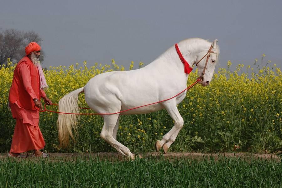 Рейтинг самых красивых и самых необычных лошадей со всего мира