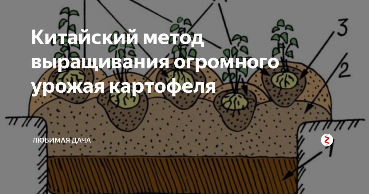 """Статья по теме """"нестандартные и эффективные методы выращивания картофеля"""""""