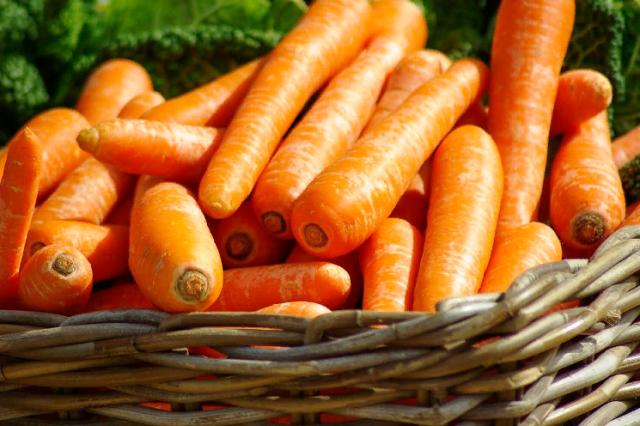 Правильная посадка моркови семенами в грунт