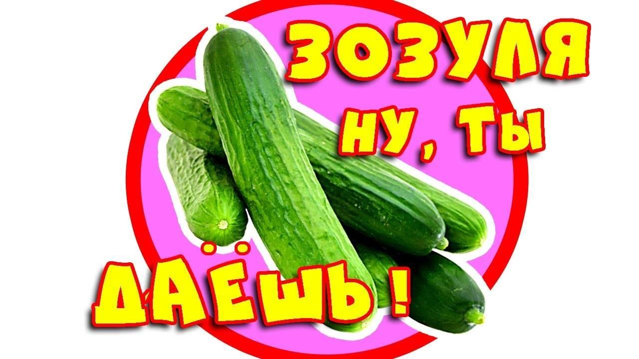 Обзор новых сортов и гибридов огурцов сезона 2016-2017