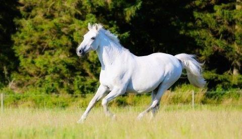 Рысь лошади: как ездить рысью правильно