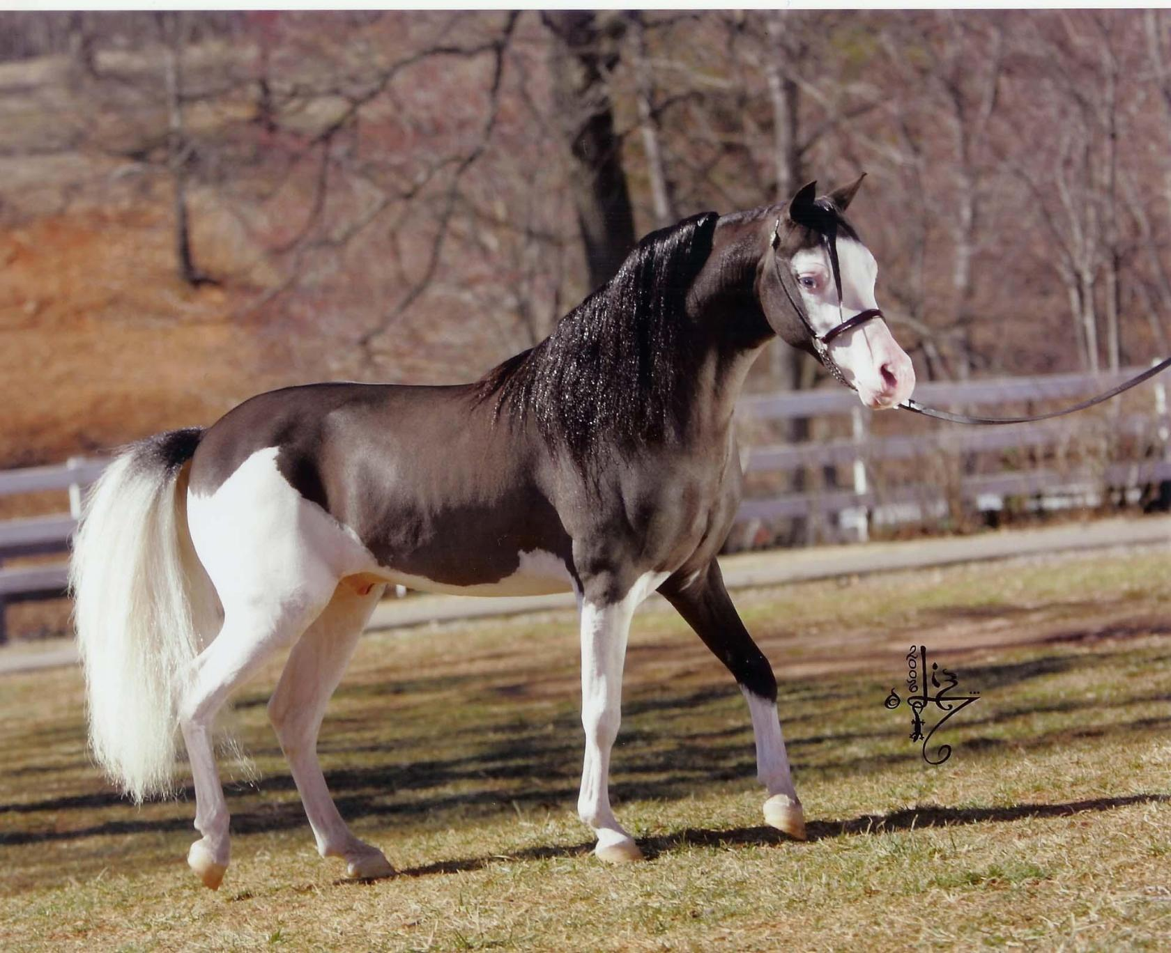Дикая лошадь — история происхождения диких видов лошади и отличительные черты, узнайте все в обзоре с фото и видео!