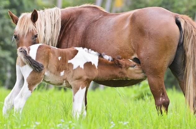 Сонник молоко лошадь. к чему снится молоко лошадь видеть во сне - сонник дома солнца