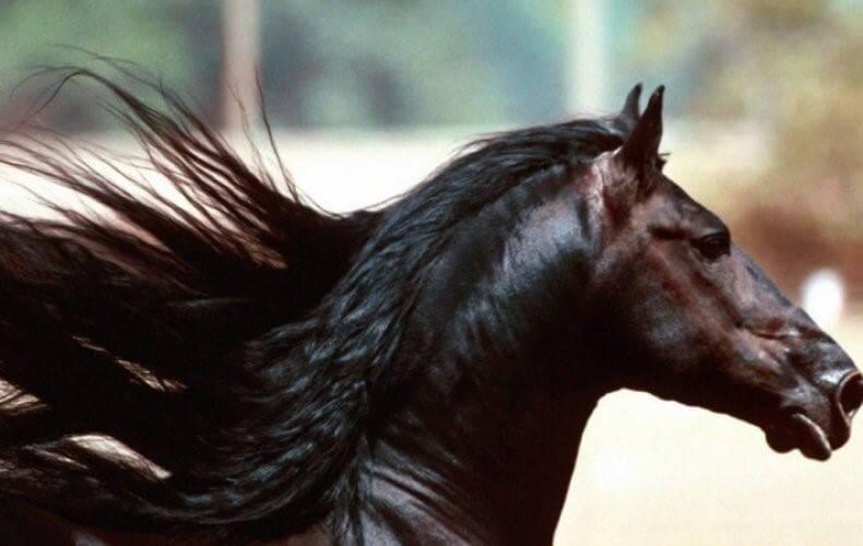 Уход за лошадьми: средства по уходу, содержание в конюшне