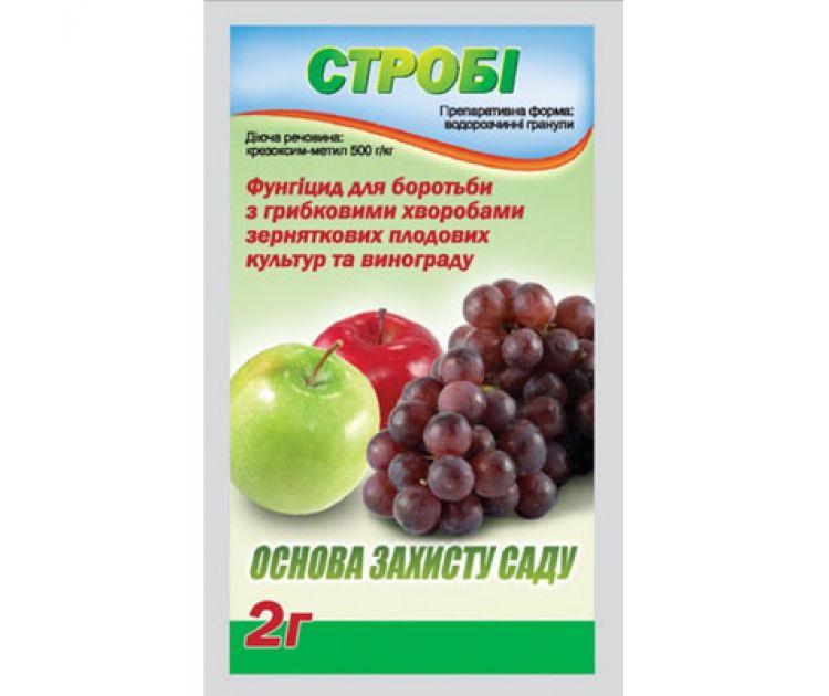 Чем  и как лечить болезни винограда?