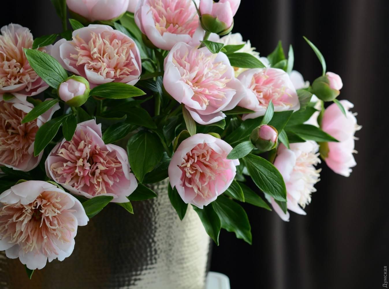 Цветы похожие на пионы название