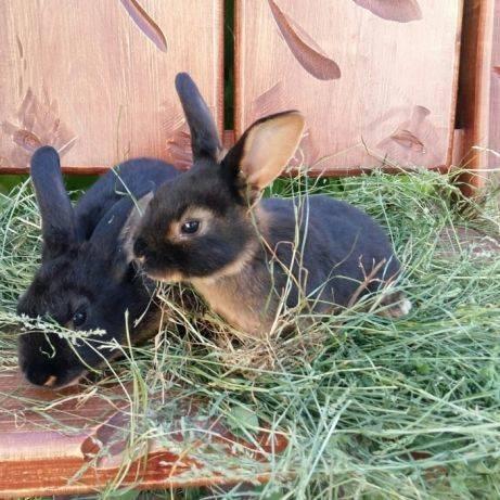 Шуба из кролика «рекс» (80 фото): что это за мех, отзывы, сколько стоит, с капюшоном, сколько носится, синяя, из королевского