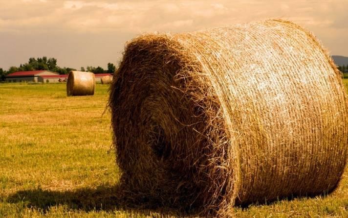 Откорм бычков на мясо: сколько можно заработать, или как я 5 лет казахских белоголовых откармливаю