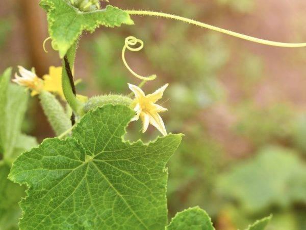 Предпосевная подготовка семян овощных культур: замачивание и обработка