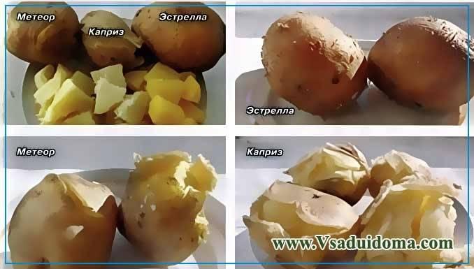 Картофель джувел описание. история происхождения сорта картофеля «джувел»