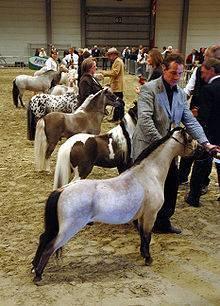 Мини-лошадь — википедия переиздание // wiki 2