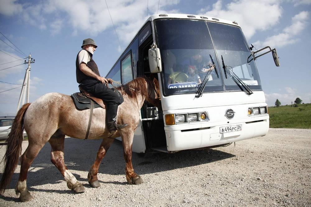 Скаковые лошади: верховые породы лошадей, голландская и бельгийская, вестфальская