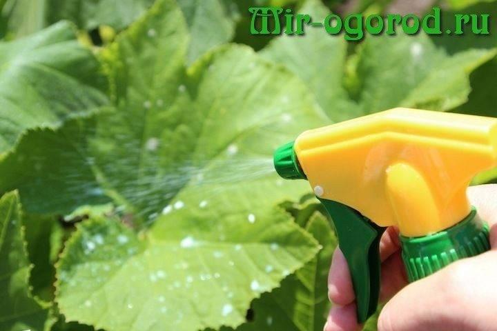 Опрыскивание борной кислотой незаменимая процедура для огурцов и помидоров