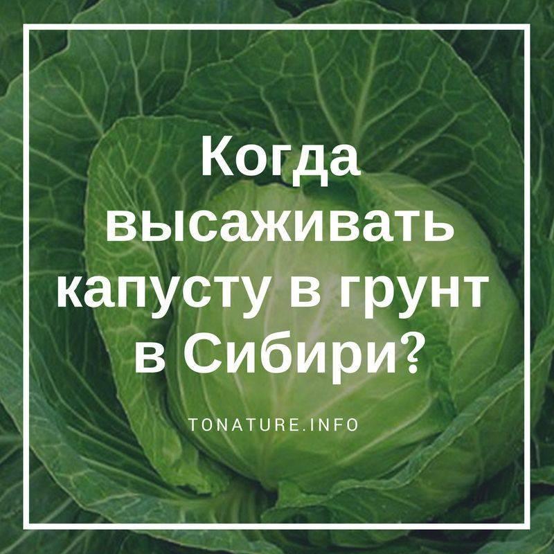 Описания и характеристики сортов капусты для посадки в сибири