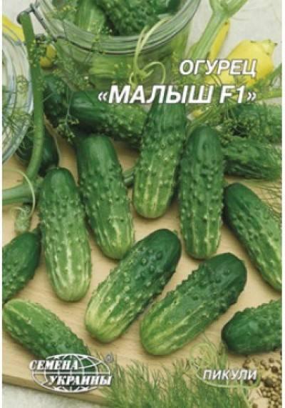 Сорт огурцов пучковое великолепие: описание, характеристика, выращивание и уход