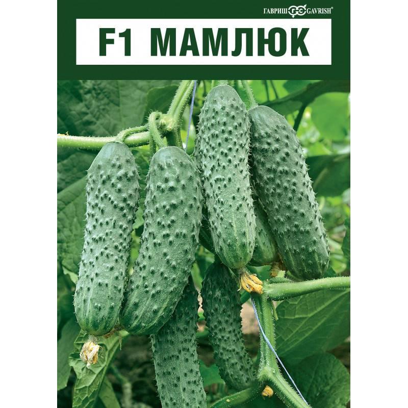 Огурец мамлюк f1 — описание и характеристика сорта