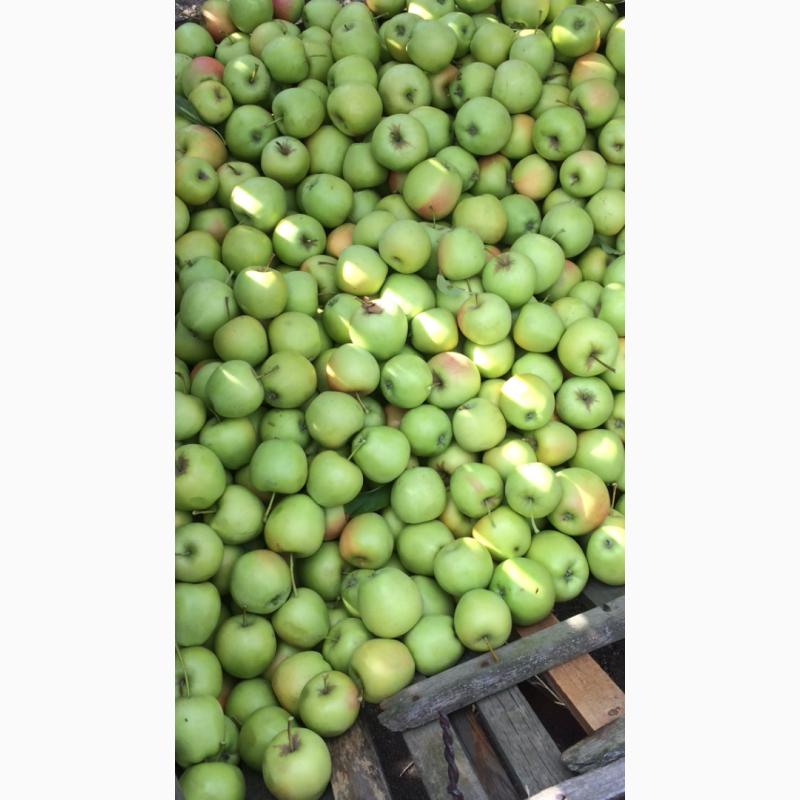 Яблоня семеренко занимает достойное место в вашем саду