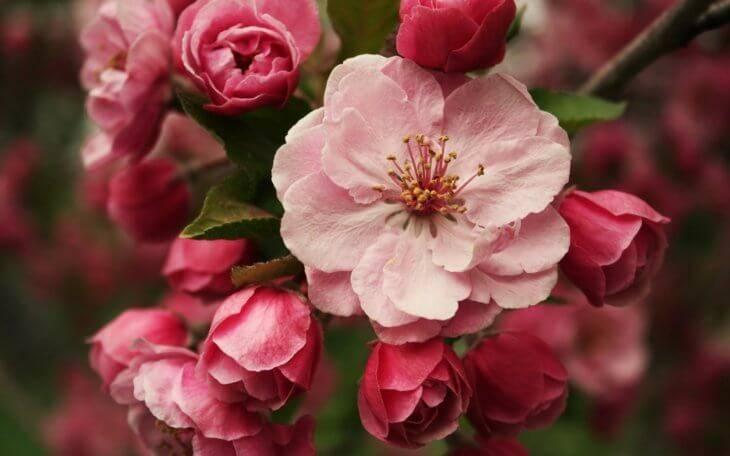 Удобрение цветов (домашних и уличных): подкормки и принципы, схемы внесения