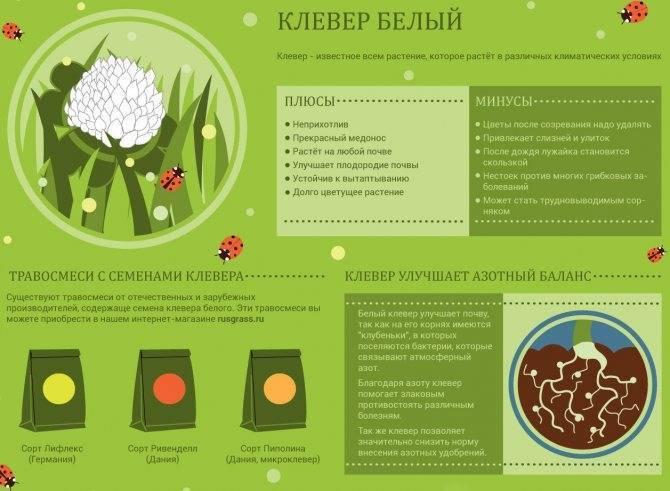 Способы сбора семян белого клевера: как собирать семена самостоятельно