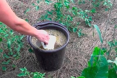 Можно ли поливать клубнику во время цветения и завязи