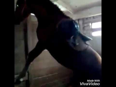 Тренировка лошадей с чего начать