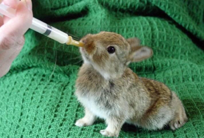 Чем кормить маленьких крольчат в домашних условиях