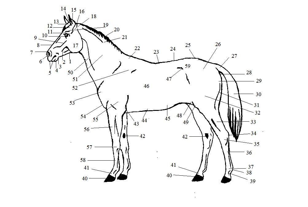 Дурные лошадиные привычки и злой нрав