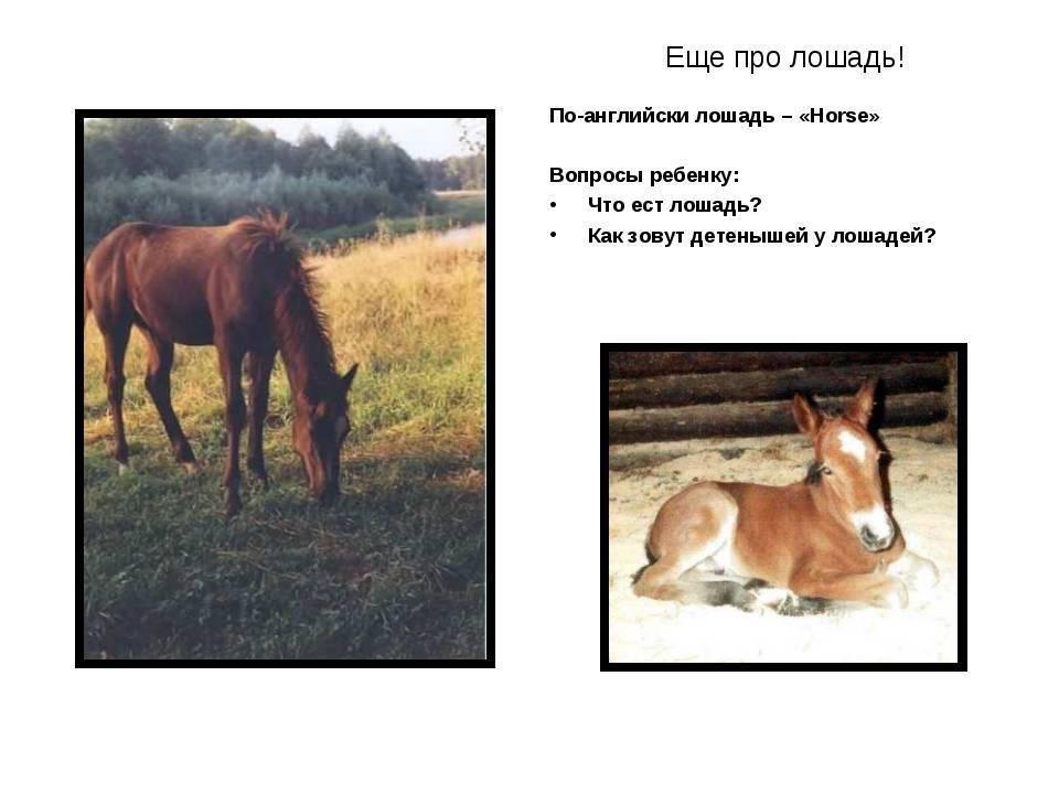 Особенности кормления и ухода за лошадьми