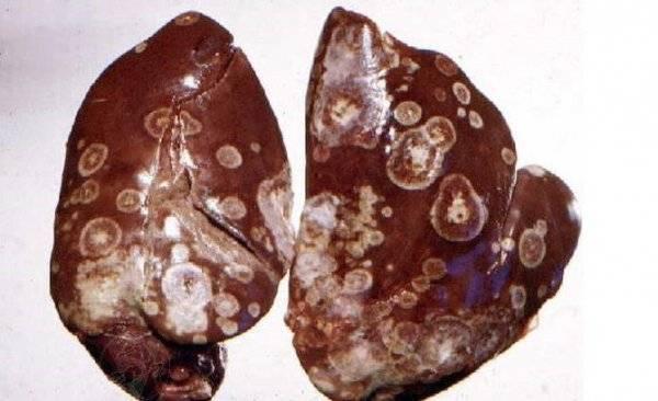 Заразные и незаразные болезни индюков, симптомы и лечение