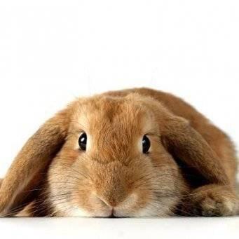 Чем лечить болячки у кроликов в ушах